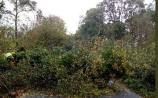 Fire Service advise care as huge trees are still falling in Laois