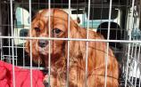 Gardaí searching for the owners of stolen dogs and puppies recovered during search