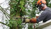 Laois people more important than Laois trees insist public representatives