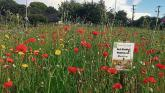 Laois council expert's advice on wildflowers not realistic claims councillor