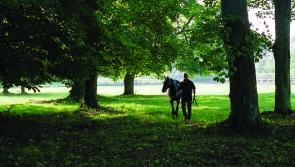Laois stud farm to feature in  big promotion of thoroughbred breeding in Ireland