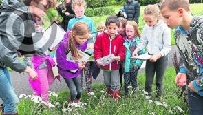 Laois Heritage Week: Pollinator Party in the Park