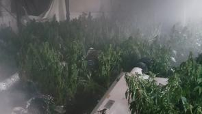 Cannabis herb factory goes up in smoke