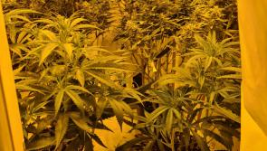BREAKING Laois Garda uncover big cannabis grow house in semi-detached home