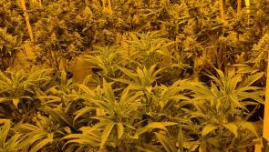 Man charged after Laois cannabis herb grow house garda bust