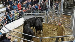 IFA to host Portlaoise farm finance meeting follwing bad year for farm earnings