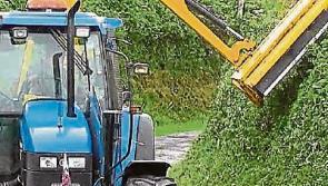 Kilkenny cutting of Laois hedges 'ludicrous' for Laois companies