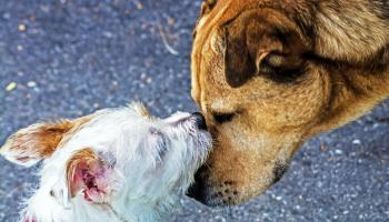 Unwanted dogs killed every day as lockdown demand ends claims Laois rescue charity