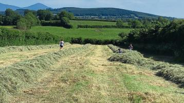 """Longford man with """"bad cough"""" chooses haymaking over court"""