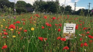 Go wild in the garden this summer with wildflowers