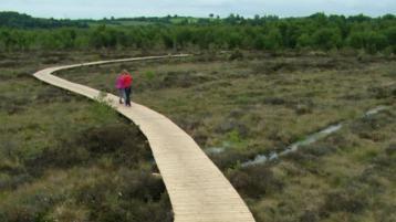 Laois Council set to spend thousands on bog and wetlands surveys