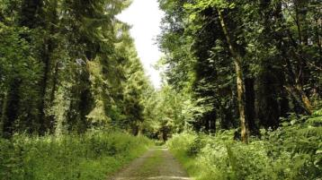 Covid pandemic memorial woodlands suggested by Laois County Council
