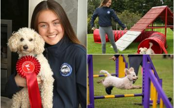 Laois girl and her poodle pooch Georgie qualify for major Crufts 2020 competition