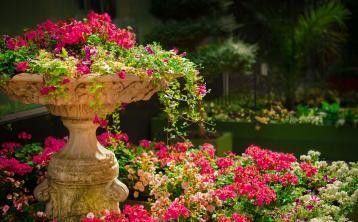 Almost €60,000 cash boost for Laois village sensory garden