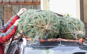 Six tips to transport your Christmas tree home safely this festive season