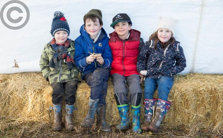 Spring on the way as Laois ploughing matches begin - Portlaoise match in pictures