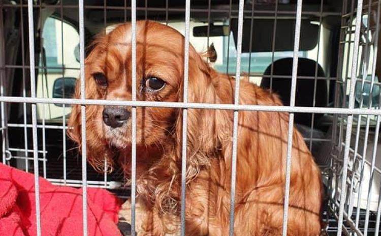 Gardaí searching for the owners of puppies and dogs suspected of being stolen locally - #pictures